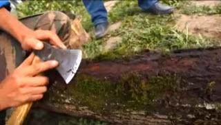 Как заготовить дерево для лыка