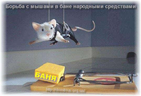 Борьбы с мышами в бане и на даче народными средствами. Фото