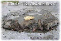 Клей против мышей. Фото