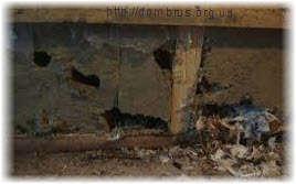 Народные средства борьбы с мышами. Фото