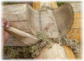 Мох для бани и Конопачение сруба мхом