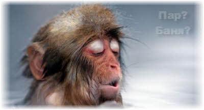 температура пара в парилке бани