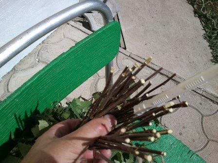 ручка березового веника